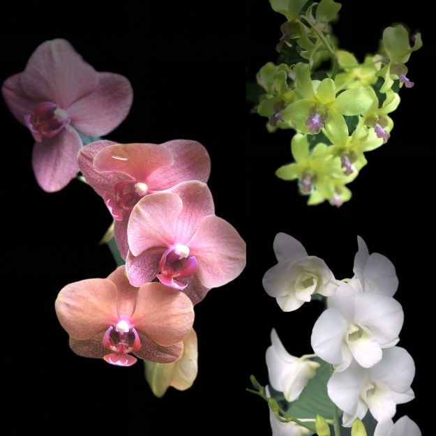 orchid thai massage heidelberg